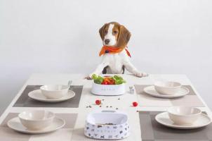 Petkit smartbowl – קערת אוכל חכמה ואנטיבקטריאלית לבעלי חיים מבית שיאומי – רק 23.99$
