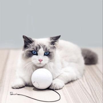 פנקו את החתולה! כדור פעילות רק ב$13.99
