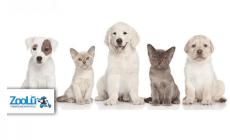 שובר הנחה לרכישה ברשת Zoolu לחיות המחמד: 10 ₪ לשובר בשווי 50 ₪ !
